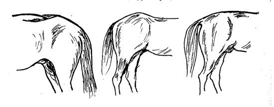 Karperyg hest